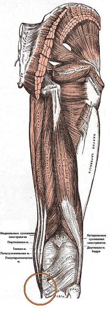 Синдром гусиной лапки коленного сустава симптомы причины диагностика и лечение