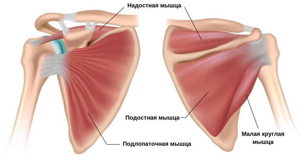 наиболее эффективные упражнения для подлопаточной мышцы