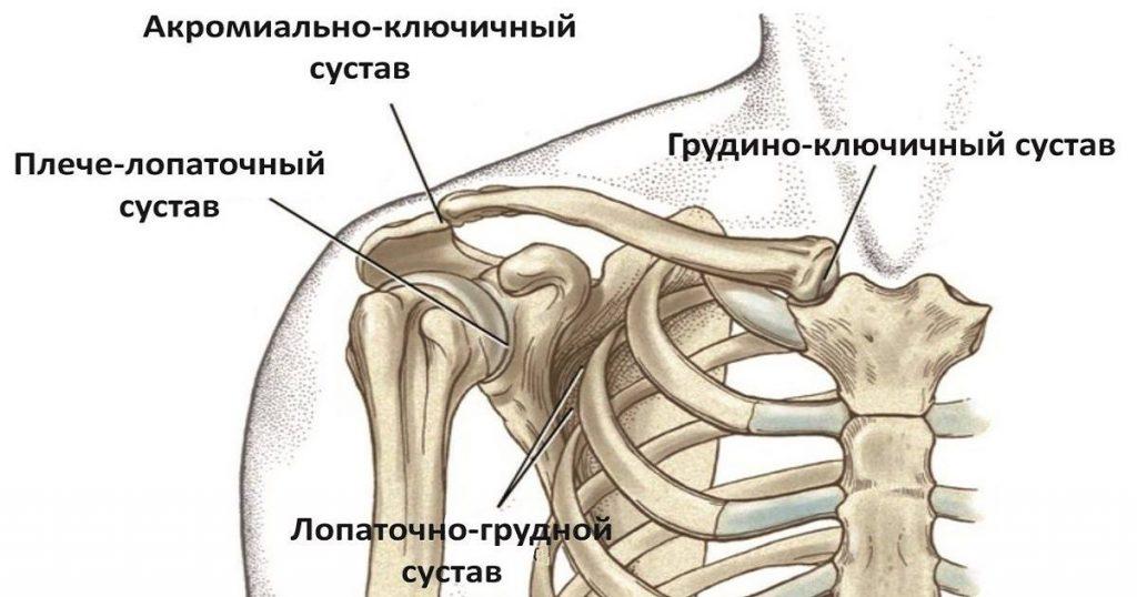 лопаточно-грудной сустав