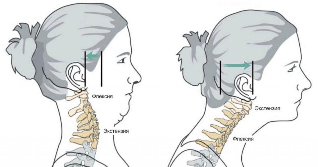Анатомия шейного отдела позвоночника - презентация онлайн | 538x1024