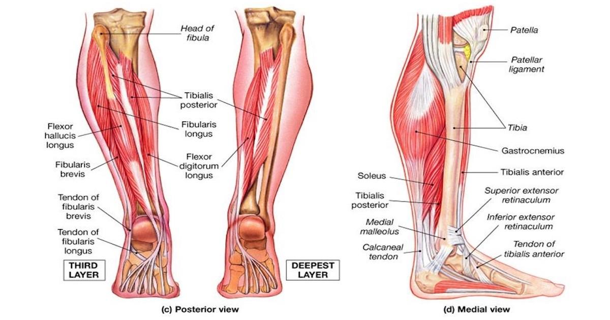 Укрепление голеностопного сустава