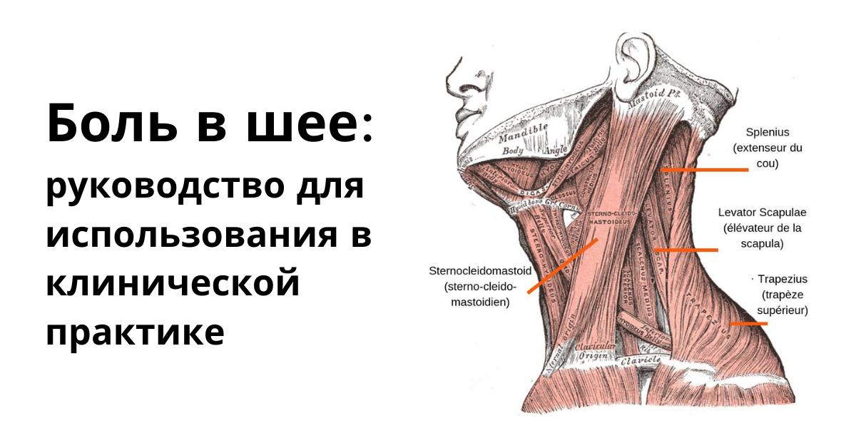 Боль в шее: руководство для использования в клинической практике