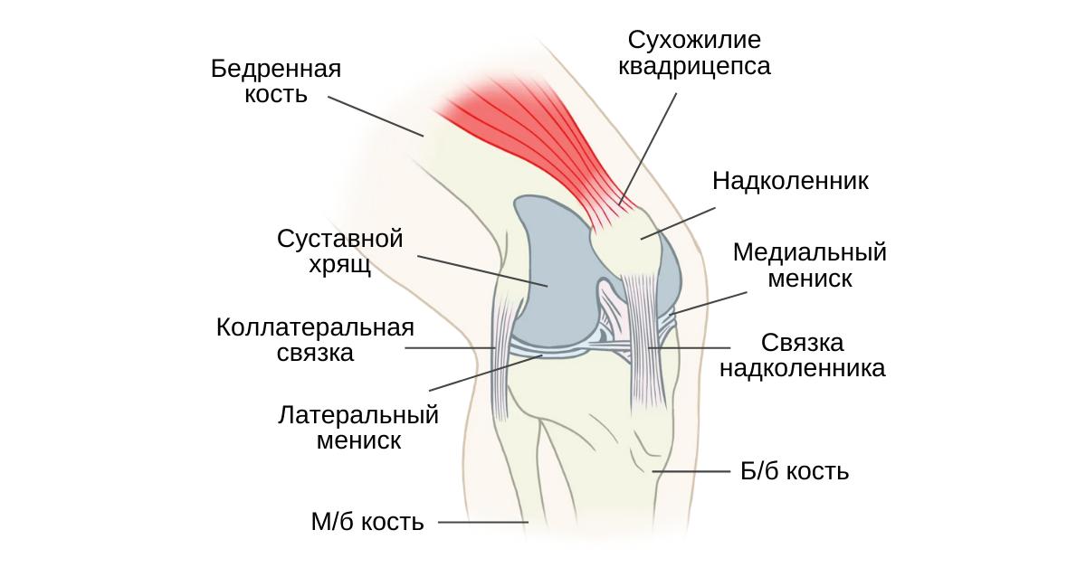 Болезненность суставной линии коленного сустава