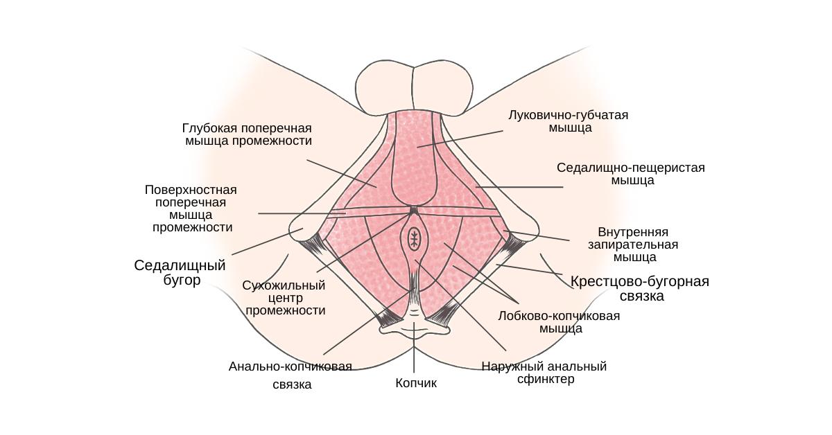 Физическая терапия у мужчин с сексуальной дисфункцией