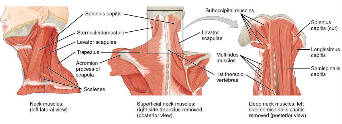 Мышечная активность при боли в шее