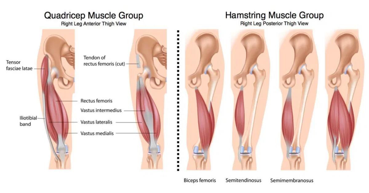 Почему мы ощущаем напряжение в мышцах?