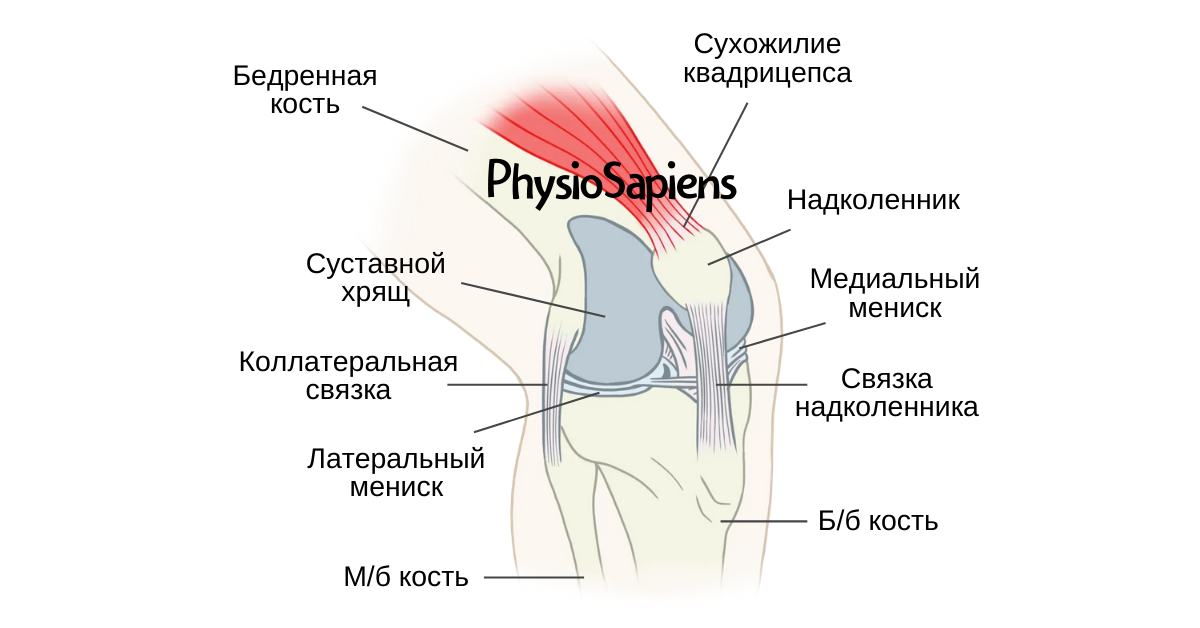 Дифференциальная диагностика пателлофеморальной и тибиофеморальной боли