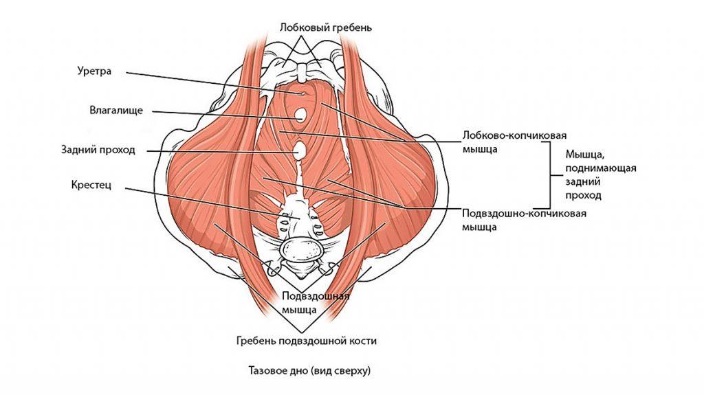 хроническая тазовая боль: причины, симптомы, лечение