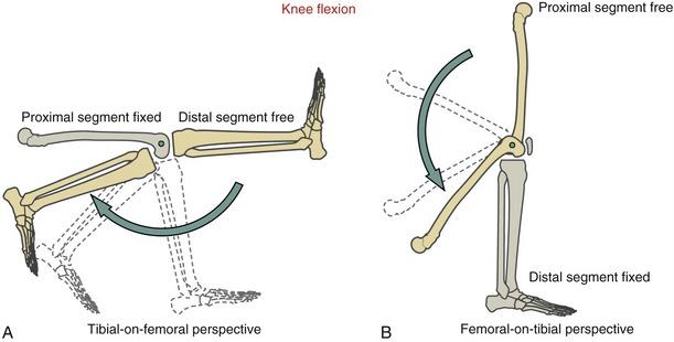 упражнения с открытой и закрытой кинетической цепью